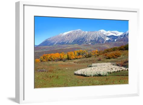 Sheep Farm near Kebler Pass in Colorado-SNEHITDESIGN-Framed Art Print