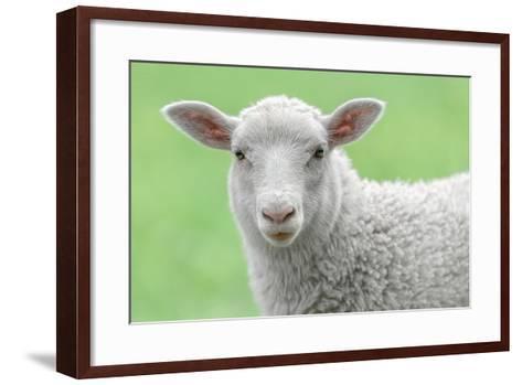Face of A White Lamb-stefanholm-Framed Art Print