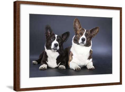 Two Corgi Cardigan-vivienstock-Framed Art Print