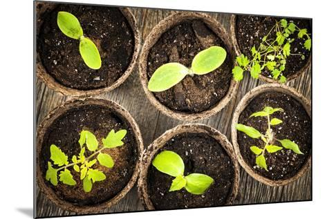 Seedlings Growing in Peat Moss Pots-elenathewise-Mounted Photographic Print
