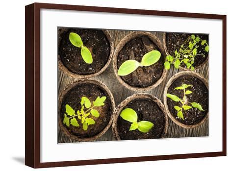Seedlings Growing in Peat Moss Pots-elenathewise-Framed Art Print