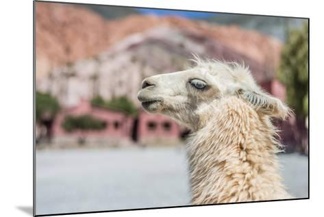 Llama in Purmamarca, Jujuy, Argentina.-Anibal Trejo-Mounted Photographic Print