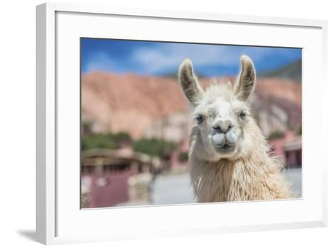 Llama in Purmamarca, Jujuy, Argentina.-Anibal Trejo-Framed Art Print