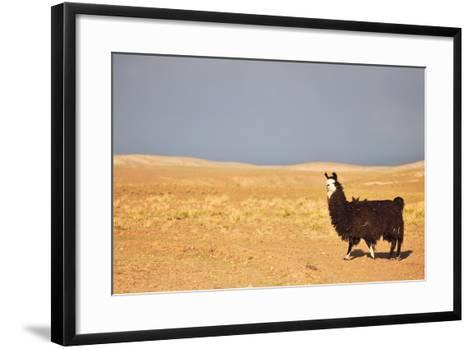South American Llama-zanskar-Framed Art Print