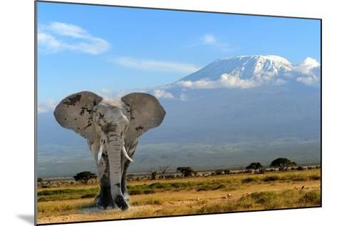 Elephant-byrdyak-Mounted Photographic Print