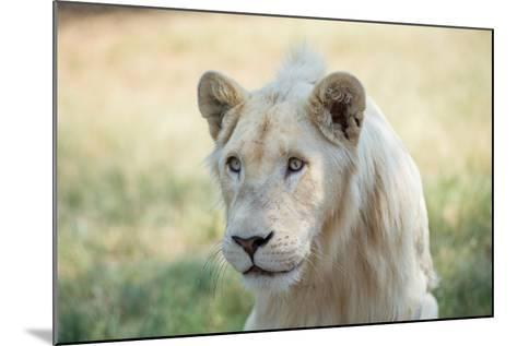 White Lion-mr anderson-Mounted Photographic Print
