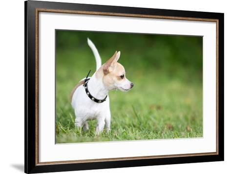 Small Chihuahua Dog Standing on a Green Grass Park with a Shallow Depth of Field-Kamira-Framed Art Print