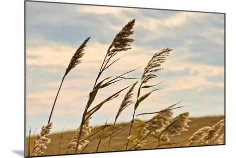 Prairie Grass on a Dry Terrain against Dark Sky and Rainy Clouds-Banet-Mounted Photographic Print