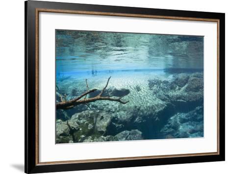 Cypress Springs Underwater Scenic-Phojo-Frog-Framed Art Print