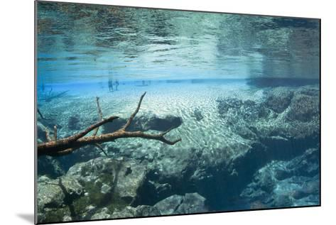 Cypress Springs Underwater Scenic-Phojo-Frog-Mounted Photographic Print
