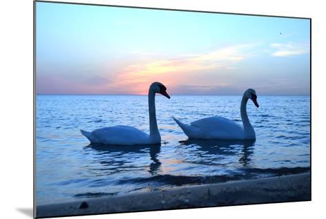 Swans-lindama-Mounted Photographic Print