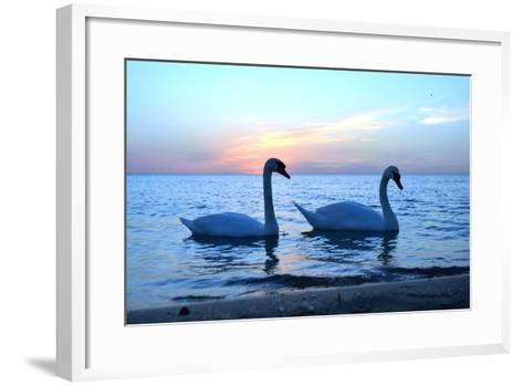 Swans-lindama-Framed Art Print