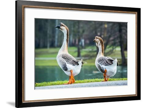 Pair of White Chinese Geese in A Park-zlikovec-Framed Art Print
