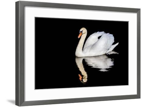 Swan with Reflection-Alan Tunnicliffe-Framed Art Print