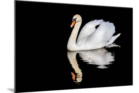 Swan with Reflection-Alan Tunnicliffe-Mounted Photographic Print