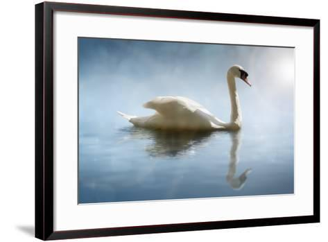 Swan in the Morning Sunlight with Reflections on Calm Water in a Lake-Flynt-Framed Art Print