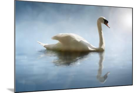Swan in the Morning Sunlight with Reflections on Calm Water in a Lake-Flynt-Mounted Photographic Print