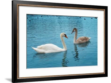 Two Swans-Vakhrushev Pavel-Framed Art Print