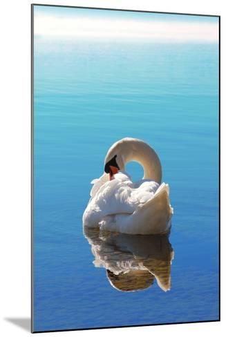 Sleeping Swan in Blue Water-SusaZoom-Mounted Photographic Print