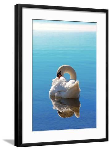 Sleeping Swan in Blue Water-SusaZoom-Framed Art Print