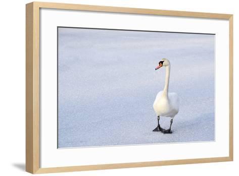 Swans on the Frozen Lake-roae-Framed Art Print