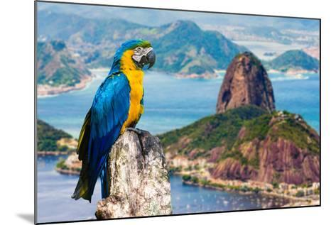 Blue and Yellow Macaw in Rio De Janeiro, Brazil-Frazao-Mounted Photographic Print