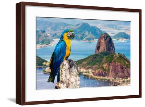 Blue and Yellow Macaw in Rio De Janeiro, Brazil-Frazao-Framed Art Print