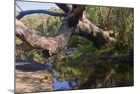 Royal Coast National Park near Sydney-Ryszard Stelmachowicz-Mounted Photographic Print