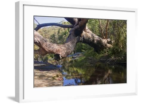 Royal Coast National Park near Sydney-Ryszard Stelmachowicz-Framed Art Print
