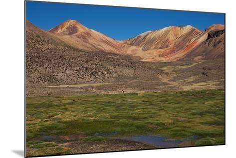 Wetland in the Atacama-JeremyRichards-Mounted Photographic Print