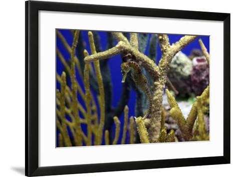 Seahorse-Dan Schreiber-Framed Art Print