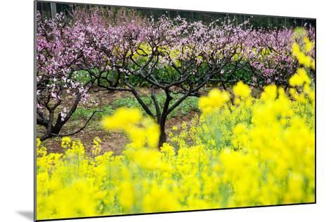 Pink Peach Flowers with Yellow Oilseed Rape Blossom.-hanhanpeggy-Mounted Photographic Print