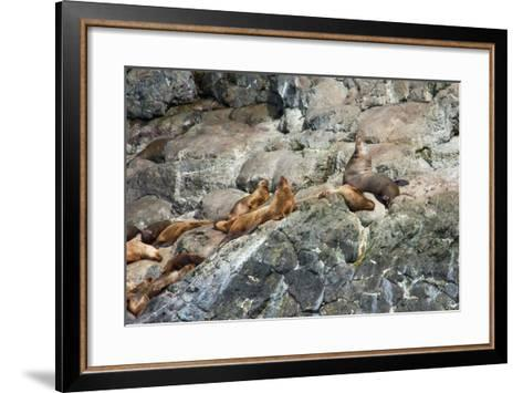 Sea Lions on Rock-Latitude 59 LLP-Framed Art Print