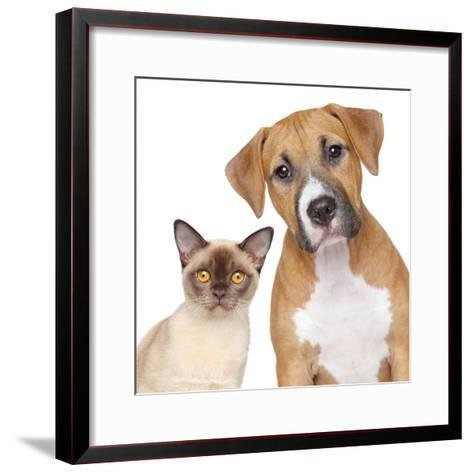 Cat and Dog Portrait on A White Background-Jagodka-Framed Art Print