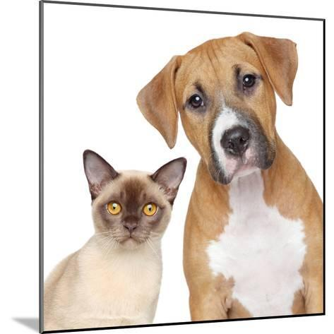 Cat and Dog Portrait on A White Background-Jagodka-Mounted Photographic Print