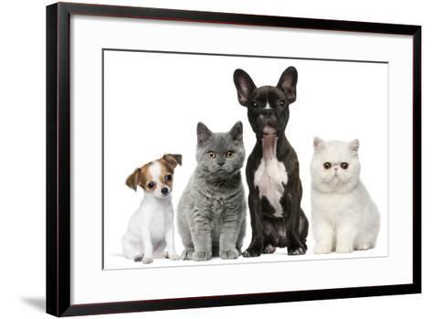 Group of Dogs and Cats in Front of White Background-Life on White-Framed Art Print