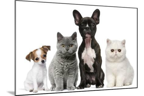 Group of Dogs and Cats in Front of White Background-Life on White-Mounted Photographic Print