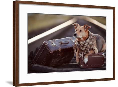 Dog on Rails with Suitcases.-AZALIA-Framed Art Print