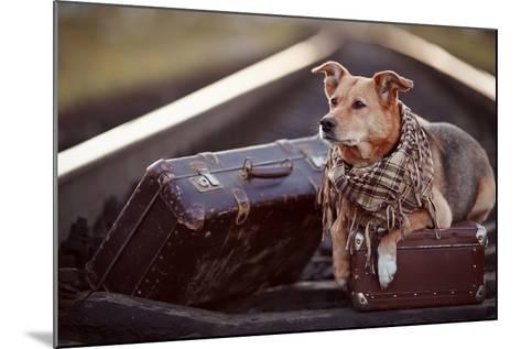 Dog on Rails with Suitcases.-AZALIA-Mounted Photographic Print