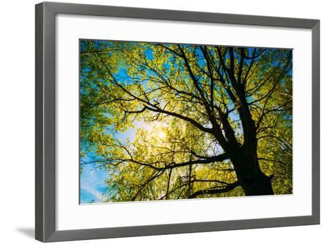 Spring Sun Shining through Canopy of Tall Oak Trees.-Grisha Bruev-Framed Art Print