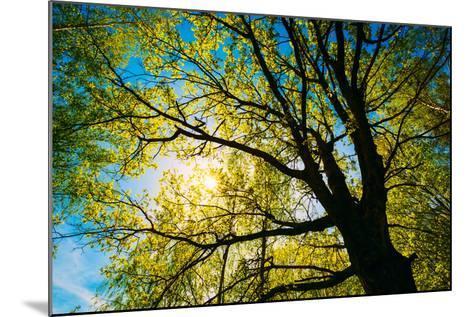 Spring Sun Shining through Canopy of Tall Oak Trees.-Grisha Bruev-Mounted Photographic Print