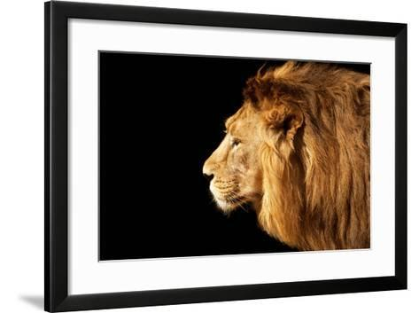 Side Face Portrait of a Beautiful Young Asian Lion, Isolated on Black Background.-olga_gl-Framed Art Print