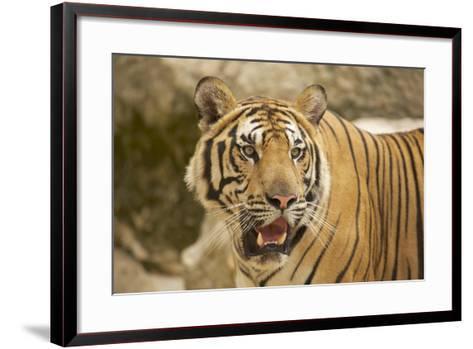 Adult Indochinese Tiger.-Dmitry Chulov-Framed Art Print