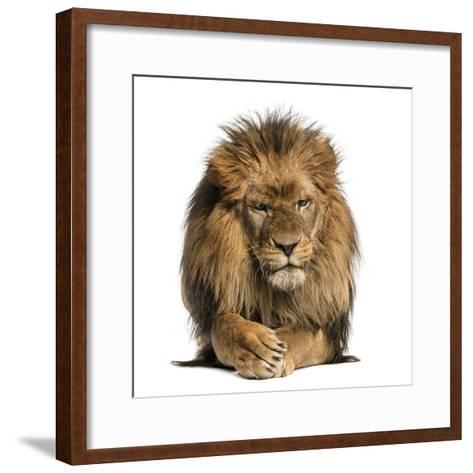 Front View of a Lion Lying, Crossing Paws, Panthera Leo, 10 Years Old, Isolated on White-Life on White-Framed Art Print