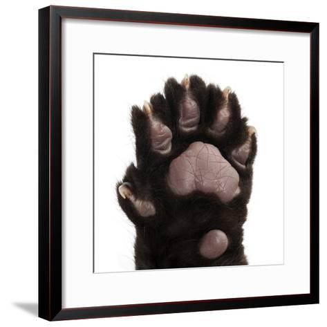 Jaguar Cub, 2 Months Old, Panthera Onca, close up against White Background-Life on White-Framed Art Print