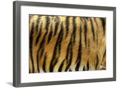 Texture of Real Tiger Skin-byrdyak-Framed Art Print