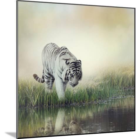 White Tiger near A Pond-abracadabra99-Mounted Photographic Print