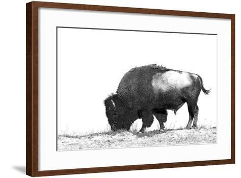 Line Art/Pen and Ink Illustration Style Image of American Bison (Buffalo) Skylined on a Ridge Again-photographhunter-Framed Art Print