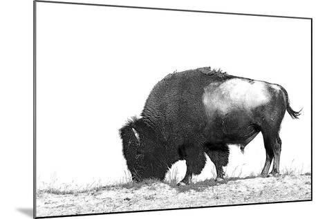 Line Art/Pen and Ink Illustration Style Image of American Bison (Buffalo) Skylined on a Ridge Again-photographhunter-Mounted Photographic Print