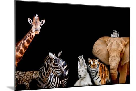 A Group of Animals are Together on A Black Background with Text Area. Animals Range from an Elephan-Art9858-Mounted Photographic Print